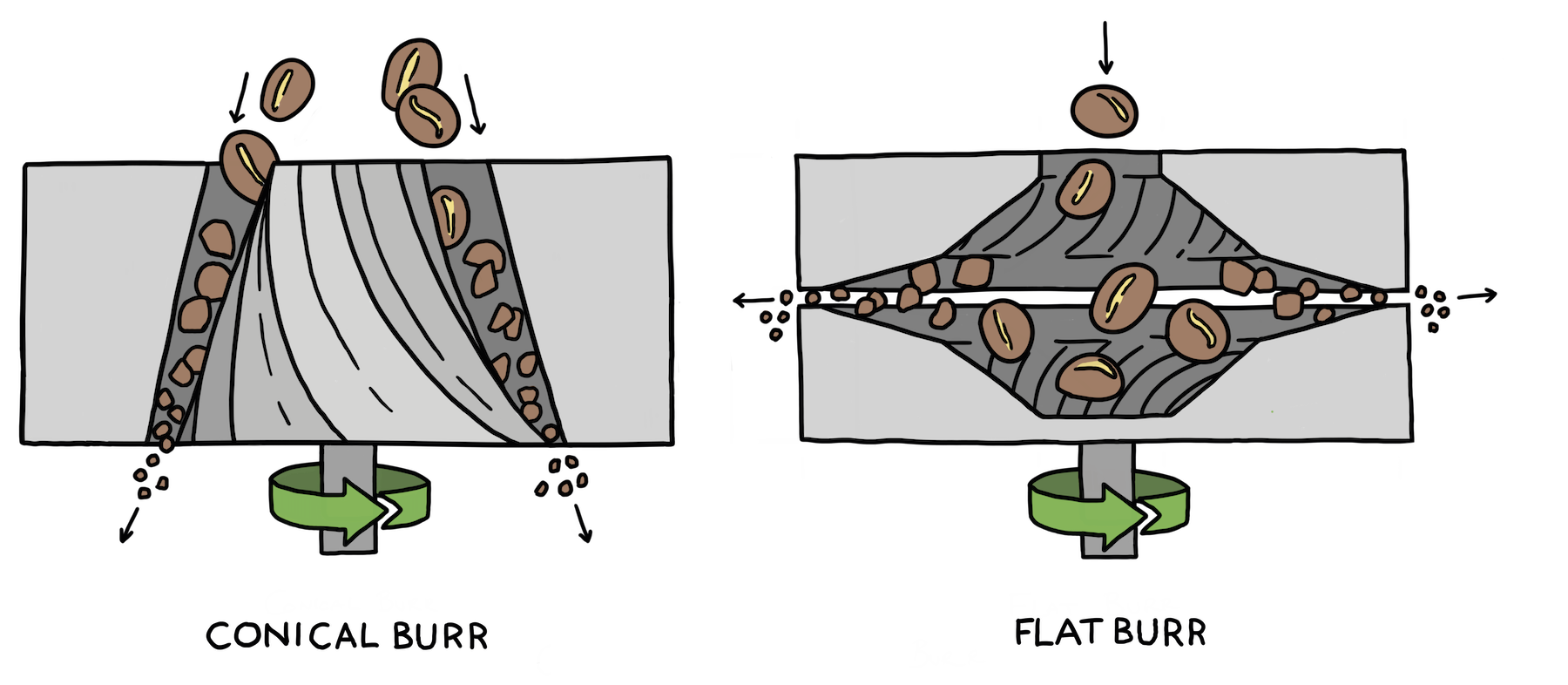 An illustration showing cross sections of both flat burr and conical burr grinders.